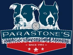 Studio29elf | Website voor American Staffordshire Terrier kennel